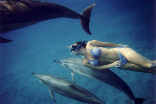 Click here to find out more about dolphin/whale excursions in Hawaii...
